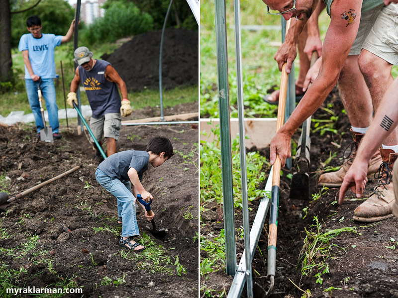 Hoop House Dreams | Adam Fu, Kip Koschell, and Max dig out one end of the hoop house... | while Jeff et al dig out the other.